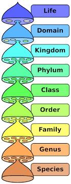Bird Taxonomy Chart Bird Species Orders Names Numbers Study Com