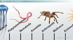 Major Animal Phyla Their Characteristics
