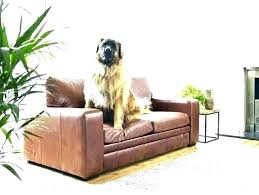 best sofa for dogs best couch for dogs best couches for dogs dog leather couch dog