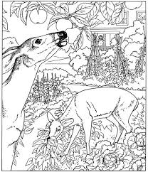 Nature Coloring Pages Deer In Jungle Coloringstar