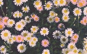 Aesthetic Flower Laptop Wallpapers ...