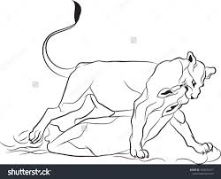 lioness hunting drawing. Exellent Drawing Hunting Prey Lioness With Hunting Drawing
