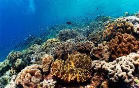 Мирового океана Ресурсы Мирового океана