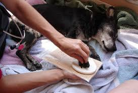 euthanizing a dog at home