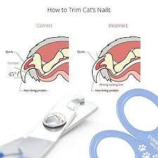 amazon simply pets cat nail clippers safe and easy to use professional snless steel pet claw cutter single pet supplies