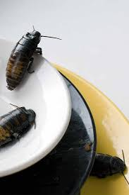 get rid of roaches in your kitchen for good