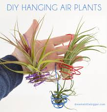 these wire hung air plants are fun and make great little gifts