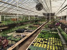 graye s greenhouse 23 photos 13 reviews nurseries gardening 8820 n lilley rd plymouth mi phone number yelp