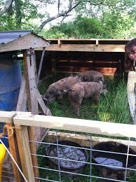 Pig Enclosure Design Moveable Pig Pen Aka The Pig Tractor Lilac Hill Farm