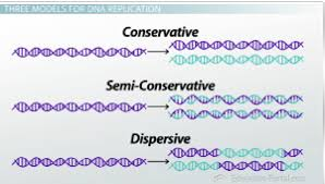 Dna Replication Definition What Is Dna Replication Conservative Semi Conservative