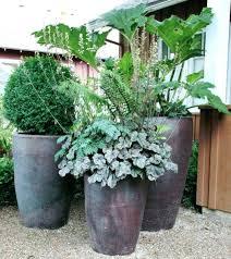 patio large patio pots and planters privacy plants in interior garden planter outdoor big leaf