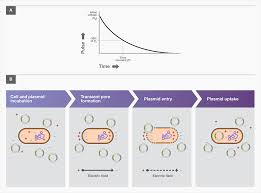 Bacterial Transformation Workflow 4 Main Steps Thermo Fisher
