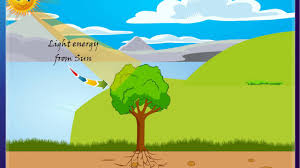 Science - Plants our Green Friends - - Part 3 - Importance of leaves - CBSE  Class 4 Science (IV)