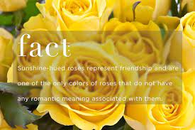know your rose meanings give the right