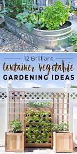 12 brilliant container vegetable