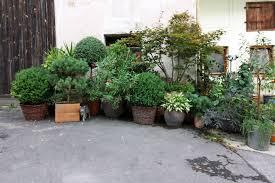 Sichtschutz Garten Pflanzen Neu Pflanzen F R K Belbepflanzung