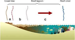 Underwater Light Maya Pdf Download Sargassum Blooms In The Caribbean Alter The Trophic