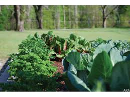 Punch List What Do To In Your Denverarea Garden In October U2013 The Fall Garden Crops