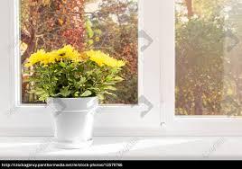 Stock Photo 12570766 Blumentopf Mit Gelben Chrysanthemen Auf Fensterbrett