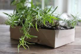 countertop herb garden upcycled tin cans into kitchen countertop herb garden