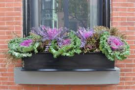 Explore a wide range of the best box flower on aliexpress to find one that suits you! The Art Of The Window Box A Few Tips And Tricks