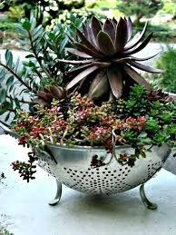 75 Best Succulents Images On Pinterest  Plants Succulent Plants Succulent Container Garden Plans