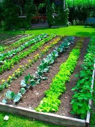 Small Picture Veggie Garden Design Markcastroco
