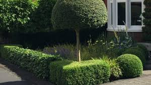 Small Picture Buxus sempervirens Clipping your box topiary Caroline Benedict