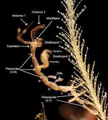 Morphology Biology Wikipedia