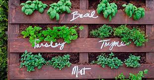 diy upcycled pallet herb garden