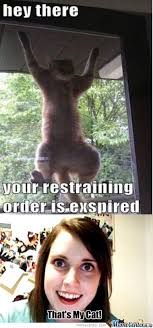 Overly Attached Cat Memes. Best Collection of Funny Overly ... via Relatably.com