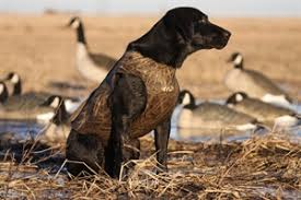 Prairiewind Decoys Standard Dog Parkas By Avery Sporting
