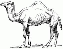 Small Picture Camel Coloring Pages Page Picturesjpg Coloring Pages clarknews