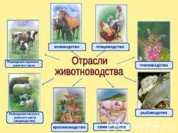 Животноводство класс презентация для начальной школы слайда 3 Отрасли животноводства