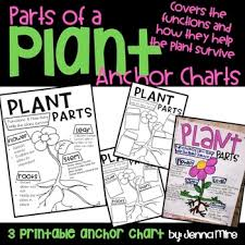 Plant Parts And Functions Anchor Chart By Msmireishere Tpt