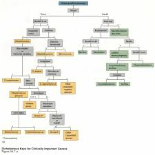 56 Scientific Bacillus Flowchart