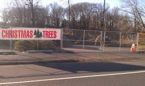 Where You Can Cut Your Own Christmas Tree In NHLocal Christmas Tree Lots