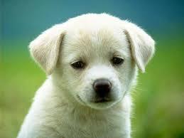 Resultado de imagen para perritos tiernos hd