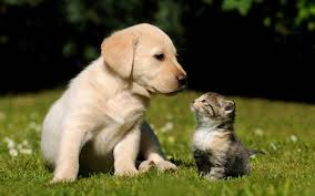 cute kittens and puppies together wallpaper. Plain Cute Cute Puppy Kitten Wallpapers  Pictures Throughout Kittens And Puppies Together Wallpaper