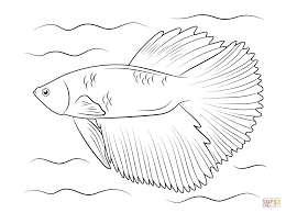 Halfmoon Betta Coloring Page Free Printable Coloring Pages