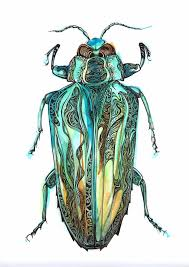 pen and ink beetle on watercolour paper art pinterest