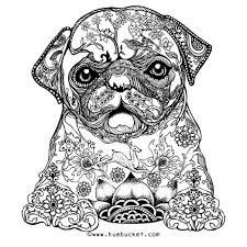 Online Coloring Pages For Adults Animals