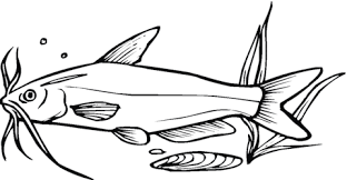 Small Picture Catfish 8 coloring page Free Printable Coloring Pages
