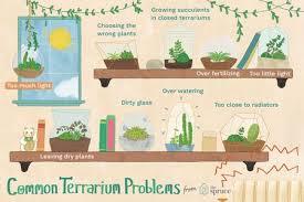 ilration of common terrarium problemistakes