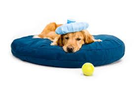 Τι είναι η γρίπη των σκύλων;