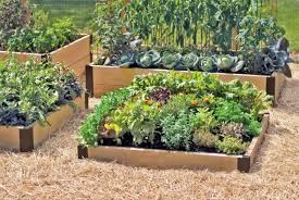 small raised bed vegetable garden shining design 9 a stone garden bed looks great when paired