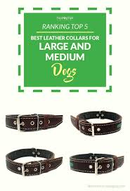 top 5 best leather dog collars for big dogs
