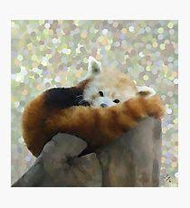 tired red panda photographic print on red panda wall art with red panda painting mixed media wall art redbubble