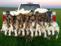 California Waterfowl Hunting Zones Map - Legal Labrador