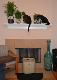 cat safe furniture. we were excited to learn about those that are not toxic cats and decided give them a try cat safe furniture